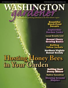Washington Gardener Magazine September 2014   The Washington Gardener Magazine September 2014 issue is now out. It was emailed as a printable PDF attachment to all Washington Gardener Magazine current subscribers.  Inside This Enews Issue: • Hosting Honey Bees in Your Garden  • Black-Eyed Susan Cultivars  • Growing Ground Cherries  • Back Issue Sale • Sept-Oct Garden To-Do List • Dealing with Eastern Yellow Jackets • Latest Blog Links • Local Garden Events ...