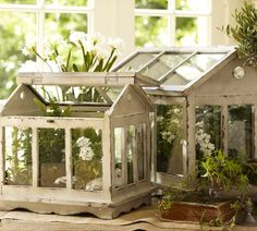 Mini Green House Terrariums. These are pretty, but I wouldn't pay 250 bucks for em. Wondering if I could find an hold bird house, or metal mail box, and make this somehow..