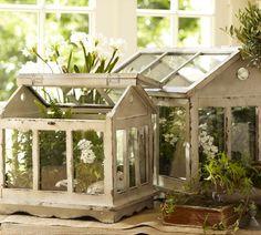 Love terrariums...