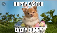 funny memes about easter Happy Easter Meme, Funny Easter Memes, Easter Festival, Easter Specials, Easter Banner, Easter Traditions, Meme Pictures, Funny Happy, For Facebook