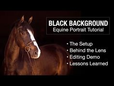 HD  How To  Take and Edit Black Background Portraits  Equine Photography  Tutorial 4ed6e96450c8