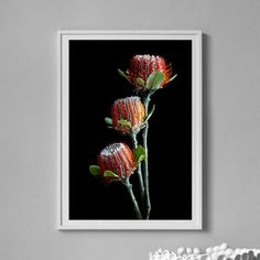 Downloadable Australian Banksia Flower Print Printable | Etsy Flower Prints, Printable, Flowers, Plants, Poster, Painting, Etsy, Art, Art Background
