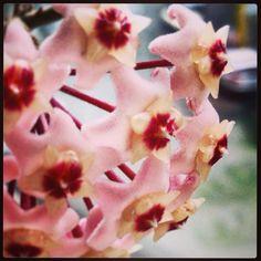 Mentre fuori arriva l'autunno, qui al Casale Tor di Quinto sbocciano i fiori!!