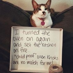 Funny Cat Shaming, Animals Shaming, Funny Cats, You finde much more on my Website! Cute Funny Animals, Funny Animal Pictures, Cute Cats, Funny Cats, Silly Cats, Animal Pics, Adorable Kittens, Dog Pictures, Cat Shaming