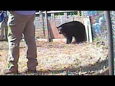 Bear Baiting - South Carolina's Shame  SIGN PETITION AND SHARE !! ON YOUR BLOGGER,  SOCIAL NETWORKS!