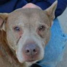 Brooklyn NY. Sunny.  Male.  7 years.  To die in a.m.  See Urgent Part 2 on fb.***KILLED***