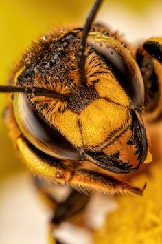 """Spiffy Board is a collection of Fascinating. Pictures around the internet or from our photographers that will surely garner a """"WHOA"""" from within. Types Of Animals, Animals And Pets, Funny Animals, Animals Images, Nature Animals, Wool Carder Bee, Bee Facts, Types Of Bees, Macro Pictures"""