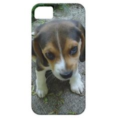Cute Beagle Puppy iPhone 5 case ~ get it at http://www.zazzle.com/cute_beagle_puppy_dog_face_iphone_5_covers_cases-179617032353242867