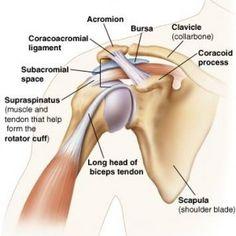 shoulder-joint (1)