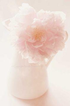 ever so soft pink  by Vaiya Rosa  http://vaiya.tumblr.com/post/21724731480