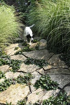 Beautiful flagstone path is actually a dog run designed specifically for the dogs to run through the landscape without harming the plantings.