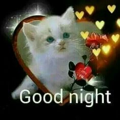 We send good night images to our friends before sleeping at night. If you are also searching for Good Night Images and Good Night Quotes. Good Night Cat, Good Night Love Quotes, Good Night I Love You, Good Night Love Images, Good Night Prayer, Good Night Friends, Good Night Blessings, Good Night Messages, Good Night Wishes