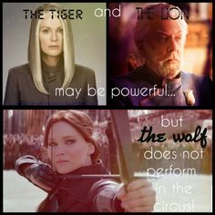 Tribute of Panem❤ - Trend Girl Quotes 2020 The Hunger Games, Hunger Games Jokes, Divergent Hunger Games, Hunger Games Fandom, Hunger Games Trilogy, Divergent Quotes, Katniss And Peeta, Katniss Everdeen, Tribute Von Panem