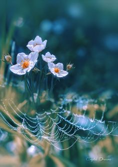 """""""Lace and pearls"""" by Tatiana  Krylova on 500px"""