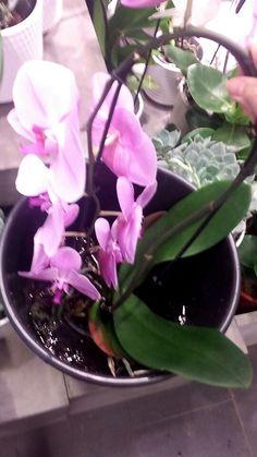 Første dag på prakisen, vanner orkideer
