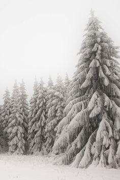 lsleofskye:  White Winter Wonder World