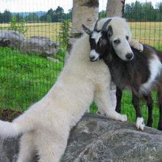 . Best Buds! So sweet.........