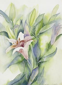 Stargazer Lilly -original watercolor painting Gail M Austin