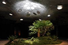 The Lowline | The World's First Underground Park thelowline.org  An old Williamsburg Bridger Trolly terminal to make the first worlds indoor park.  Open panels above provide light for the trees inside