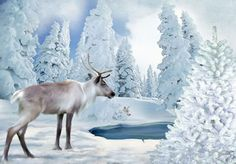 ShapeShifter Seduction: Season's Greetings ... White Wolf and Reindeer, a ...