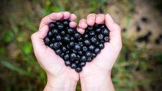 | Nový Čas Blackberry, Fruit, Food, Medicine, Fotografia, Blackberries, The Fruit, Meals, Yemek