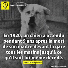 Starting in for 9 years after the death of his master, this dog waited outside the station every morning, until his own death. Happy End, Hachiko, Happy Stories, Real Facts, Interesting News, Akita, Wallpaper Quotes, No Time For Me, Did You Know