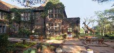 In Kenya, ad una ventina di km dal centro di Nairobi, c'è un piccolo ed esclusivo hotel che ospita nel suo parco enorme un branco di giraffe Rothschild, con l'intento di salvarle dall&#821