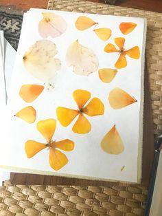 Comment garder les couleurs des fleurs lors de la mise sous presse ? Fleurs Diy, Plastic Cutting Board, Flower Types, Fresh Flowers, Peony, Colors