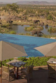 hotel pool Four Seasons Safari Lodge, Serengeti National Park, Tanzania Beautiful Pools, World's Most Beautiful, Kenya, Boutiques, Serengeti National Park, Tanzania Safari, Beste Hotels, Hotel Pool, To Infinity And Beyond