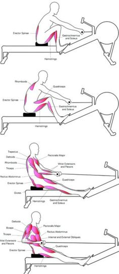 Muscles worked while Rowing