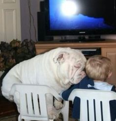 #animals #dog #babys #child #sleeping
