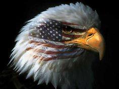 American  flag  on  a   Bald  eagle  face.   Aka war paint!