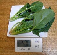 ほうれん草40gで子どもに急性中毒リスク 国の残留基準緩和案で農薬漬けになる野菜はこれだ!:MyNewsJapan