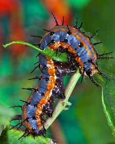 Caterpillar by ~JaggedTech