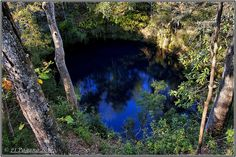 Big Dismal Sink in Leon Sinks Geological Area, Tallahassee, Florida