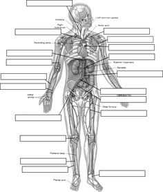 Anatomy and Physiology Coloring Pages Pdf - Anatomy and Physiology Coloring Pages Pdf , Coloring Pages the Anatomy Coloring Book Edition Ocean Human Anatomy Drawing, Human Anatomy And Physiology, Human Anatomy Chart, Human Body Unit, Human Body Systems, Anatomy Coloring Book, Coloring Books, Digestive System Anatomy, Muscle Diagram
