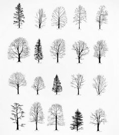 Tree Silhouettes - don't know if printable or not but might be good for homemade cards, etc. http://designspiration.net/image/780678439988/