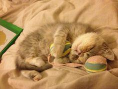 ( ͒ ु-·̫- ू ͒)   #neko #cat  (via bnr7403)