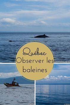 Excursion en zodiac pour observer les baleines au Québec, à l'embouchure du fjord du Saguenay et du Saint-Laurent