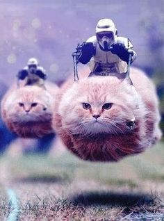 """Authorities asked social media users not to share police movements, so the Internet found the perfect way not to let the cat out of the bag: """"Post cat pics, not police movements"""""""