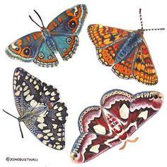Magdalena Krejčí (@jednodusetvurci) • Fotky a videa na Instagramu Moth, Insects, Animals, Instagram, Fairy Cakes, Animales, Animaux, Animal, Animais