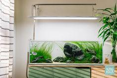 20 Gallon Long Update - Ready For Final Photo After 5 Months : PlantedTank Planted Aquarium, Aquarium Fish, 20 Gallon Long Aquarium, Fish Aquarium Decorations, Aquarium Ideas, Nitrogen Cycle, Cool Fish Tanks, Aquarium Landscape, Aquascaping