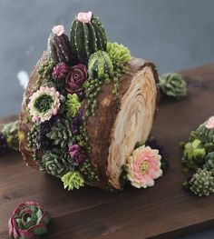 A faulty log? Is there such thing? Lol 😅 My fault line rendition with a succulents twist. Can't decide between light and dark backgrounds. Succulent Gardening, Cacti And Succulents, Planting Succulents, Suculentas Interior, Succulent Cupcakes, Cactus Cake, Log Cake, Rustic Cake, Cake Decorating Techniques