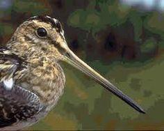 De Snip een bijzondere watervogel  De Snip een bijzondere watervogel, in ons land kennen we 3 soorten van Snippen te weten de Houtsnip, de Watersnip en het Bokje. In Nederland komen veel meer watervogels voor dan in vele andere West – Europese landen. In de winter trekken de meeste watervogels naar de kust daar is het makkelijkst voedsel te vinden in de koudere tijden. Nederland is in de vogelwereld van groot belang als overwinteringsgebied, als bijtank plaats op weg naar het zuiden