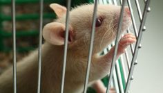 Expérimentation animale : des tests toxicologiques sur des cellules sont un succès! - Fondation 30 Millions d'Amis