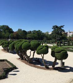 Cipreses topiarios en el Parterre del Retiro de Madrid | El Blog de La Tabla
