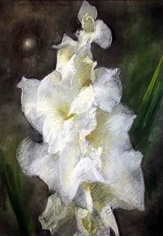 Gladiola drawings & pastel paintings by Polly Thayer (Starr)