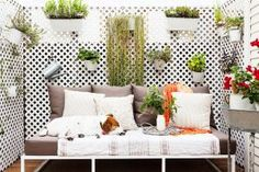 Adding a few features that make a dog feel at home on a tiny terrace will make the time you spend there together better.