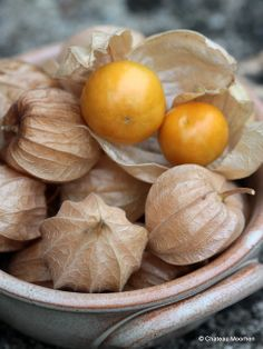 Physalis - Cape Gooseberries. Me thinks it could make a cool centerpiece.
