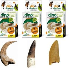 """Dig & Discover Teeth & Claw Replica Excavation Kit $6.99  Description Enjoy the paleontology experience of uncovering your dinosaur teeth and claw replica specimens using the provided chisel Each kit includes gypsum brick (L: 4"""" x W: 3"""" x H: 1""""), chisel, and educational pamphlet Paleontology Approved and STEM recommend for age 6+"""
